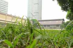 LSM-Soccer-Field